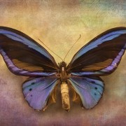Compassionate butterfly