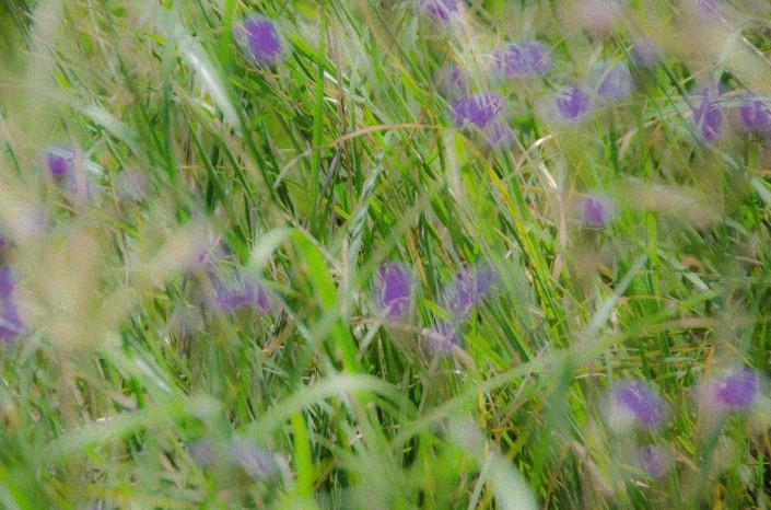 Purple wildflowers Deborah Jackson Psychology